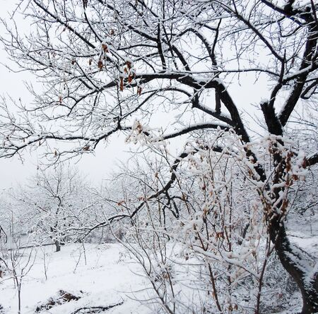 a lot of snow on tree branches in the garden on a winter day. winter landscape in the garden Stockfoto