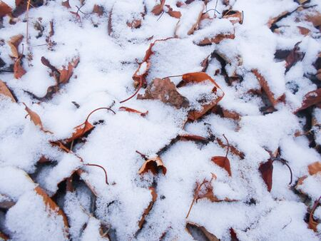 winter snowfall on the ground among the leaves. cold winter day