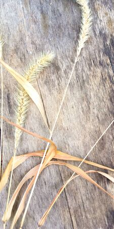Yellow ear and leaves on a wooden board, place for text. 스톡 콘텐츠
