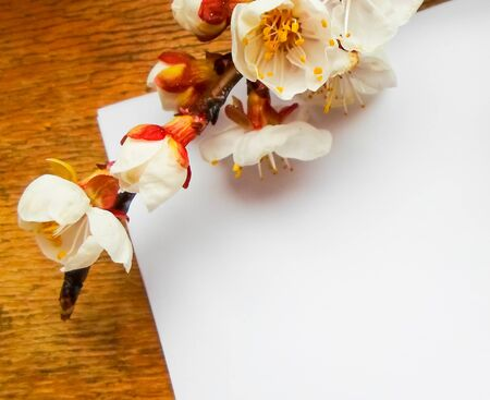 Apricot flowers on a wooden background. Apricot tree branch lies on a wooden board. Foto de archivo - 142381869