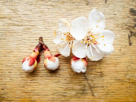 Apricot flowers on a wooden background. Apricot tree branch lies on a wooden board. Foto de archivo - 143088745