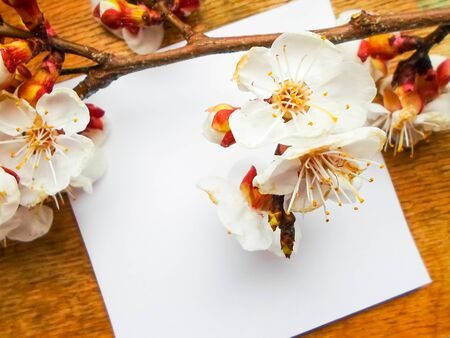 Apricot flowers on a wooden background. Apricot tree branch lies on a wooden board. Foto de archivo - 143089703