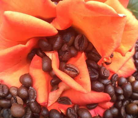 a bunch of coffee beans and a red rose are lying on the table. Coffee texture and background image.