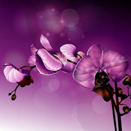 dark pink orchid flower in horizontal composition Stock Illustratie