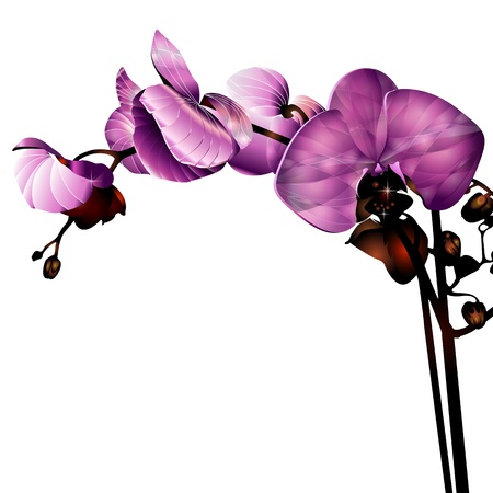 purple orchid: orchid flower label with space for your message Illustration