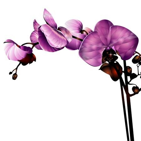 orchidee bloem etiket met ruimte voor uw bericht