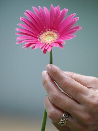 Photo of a woman's hand holding a daisy 12