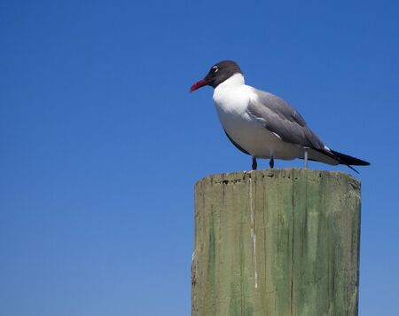 piling: Seagull perched on top of a piling