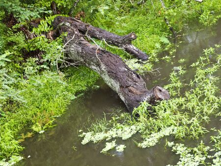 Photo image of a fallen log in a stream Stock Photo - 9879107