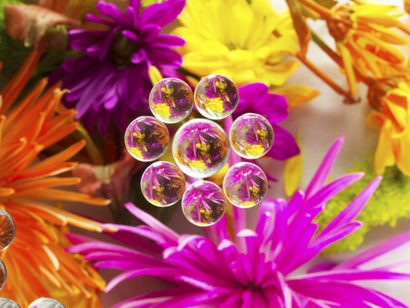 FLOWERS REFRACTION 9