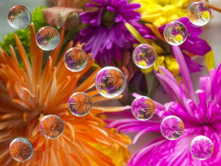 FLOWERS REFRACTION 18