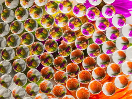 FLOWERS REFRACTION 1 版權商用圖片