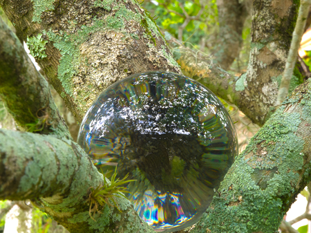 HDR Photo image of a crystal ball in bushes 2 Фото со стока