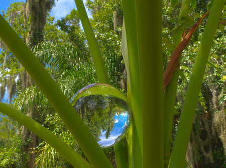 HDR Photo image of a crystal ball in philodendron Stock Photo