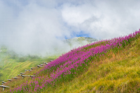 Alpine meadows in bloom. Wooden install security snow avalanche. Clouds over the mountain peaks.