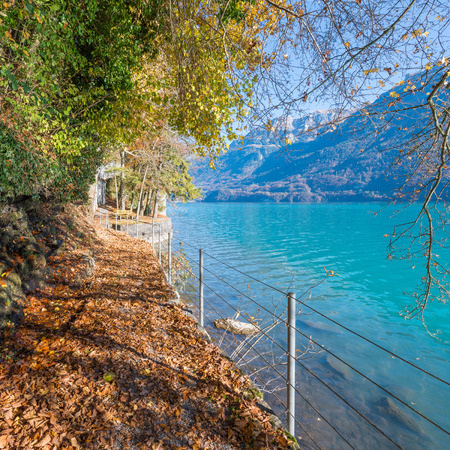 clear path: Path along mountain lake. The fallen orange and yellow foliage. Autumn clear and quiet day. Switzerland near city Bern. Stock Photo