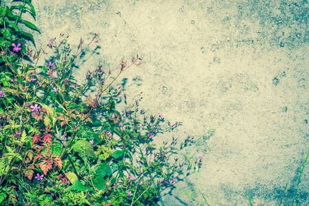 multi level: Flowers on the background of concrete wall. Original web page.