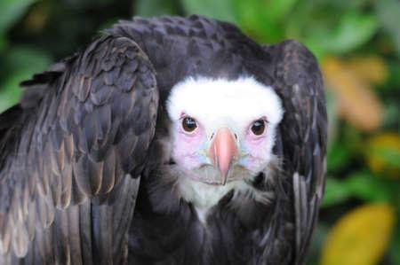 wildlive: predatory bird