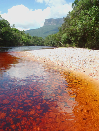 Reddish Canaima. special Color of the waters of the Rio Carrao in Canaima National Park. Gran Sabana, Venezuela