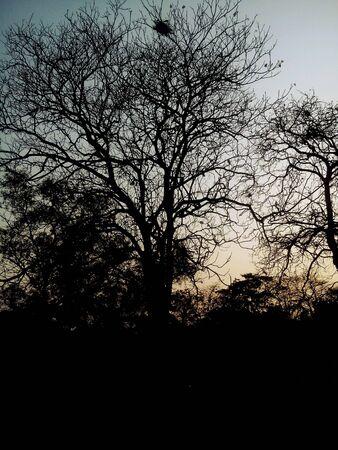 Trees silhouette retro tone Stock Photo