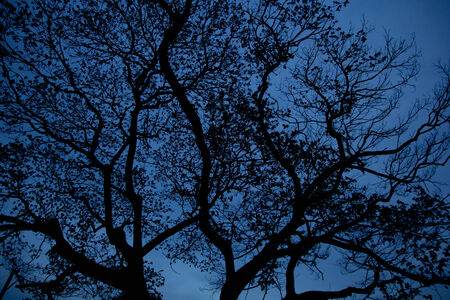 Silhouette Trees after sunset