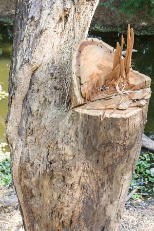 loging: Cut tree in garden closeup