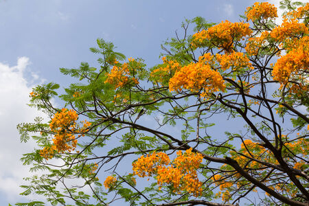 Tree flower on Cloudscape background
