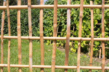 bamboo wall in Protection fram