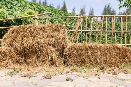 Hay on floor on sunlight