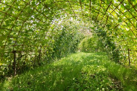 the vegetable garden in shade