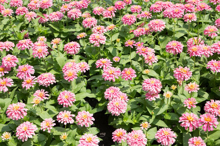 Pink Flower Summer Field Nature Background