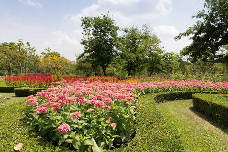 Flower field summer In Garden background