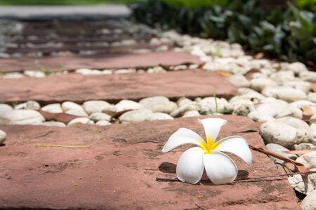 White Flower on stones path garden