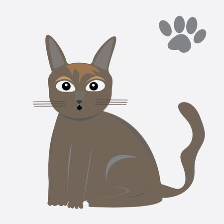 Cat on white background vector