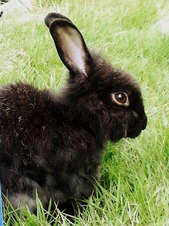 eye: Rabbit running in forest
