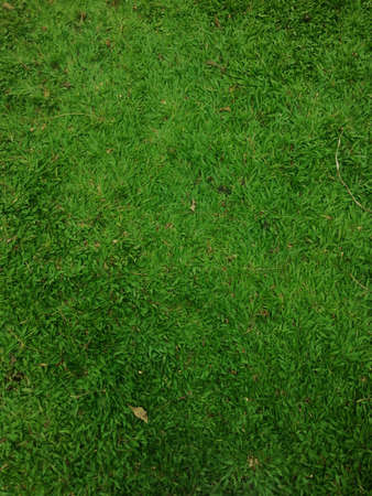 design: Grass pattern for concept design