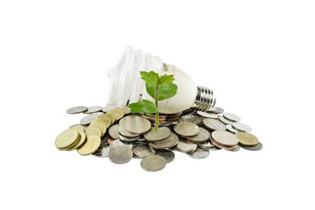 vitreous: Tree and light bulb on coins heap (energy savings concept) on white background