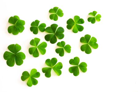 isolated  on white: green clovers on white background