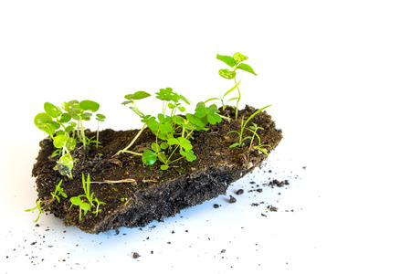 soli: growth plant on mini soli white background Stock Photo