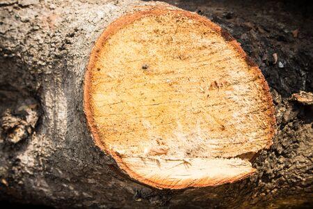 cutted: wood cutted