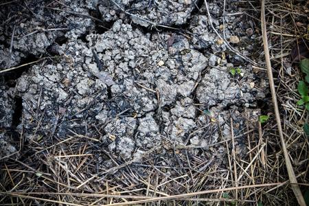 quemado: agrietada y de la tierra quemada