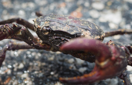 still alive crab close up it protect self from any harm