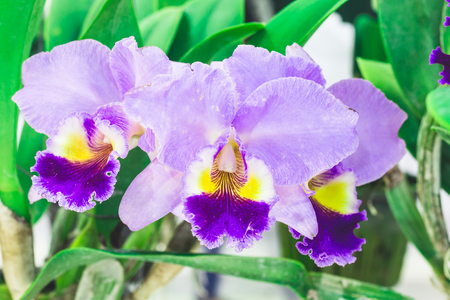 beautyful: colorful orchid flowers plant in nature concept look bright and beautyful light