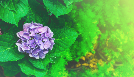colorful flowers plant in nature concept look bright and beautyful light Stock Photo