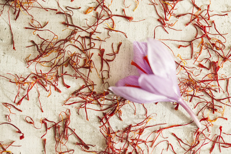 one saffron flower out focus and a lot of drying saffron types Imagens