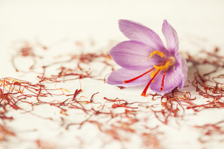 one saffron flower out focus and a lot of drying saffron types Zdjęcie Seryjne