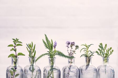 Bottle of essential oil with herbs oregano, rosemary, lavender flower, Rue herb ,thyme set up on white background.