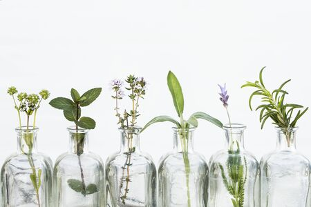 Bottle of essential oil with herbs lavender flower, rosemary ,flower of canons, thyme and sage set up on white background. Banque d'images