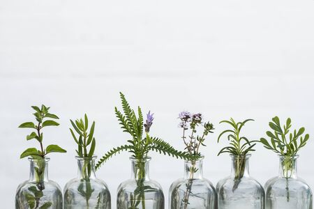 Bottle of essential oil with herbs sage, rosemary, oregano,lavender flower, Rue herb ,thyme set up on white background.