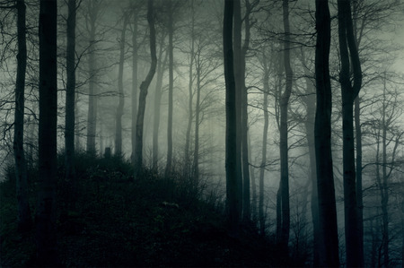 horrors: Foggy dark forest with a black slope